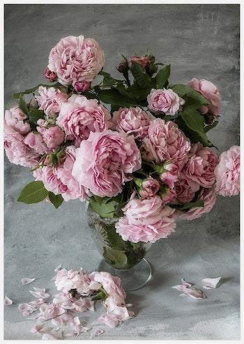 Rose Duchesse de Montebello'